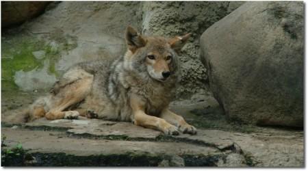 Myth of the Lone Wolf Larry Broughton yoogozi